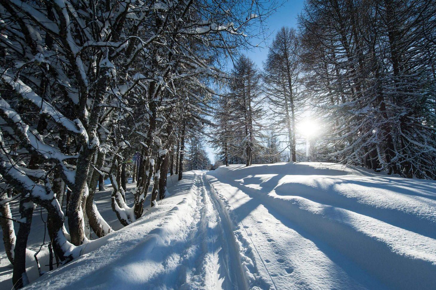 Promenons-nous dans les bois... à Valloire-Galibier